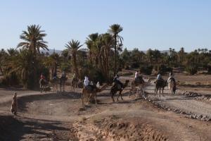zagora camel rides