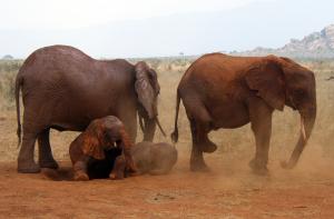tsavo national park kenya.png